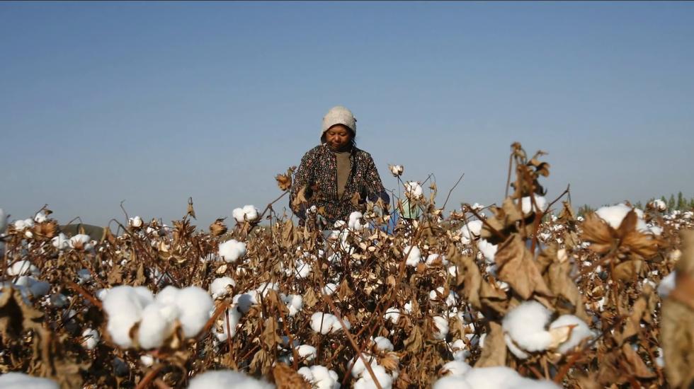 """Gli Stati Uniti bloccano le importazioni di cotone dello Xinjiang a fronte del """"lavoro degli schiavi"""" uiguri"""